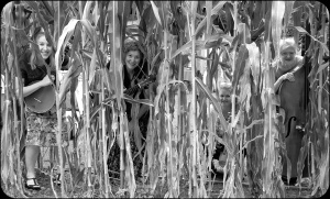 BAB in the Corn