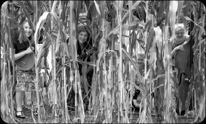 BAB in the Corn